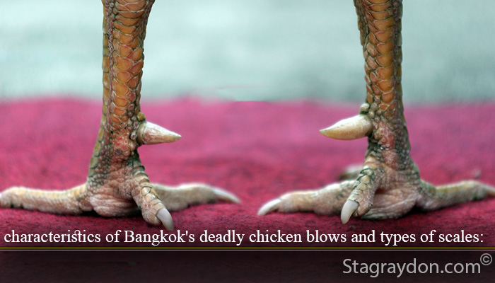 characteristics of Bangkok's deadly chicken punch and types of scales