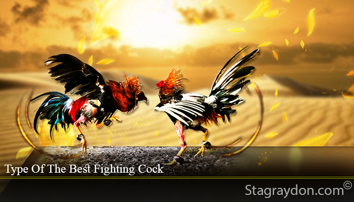 Type Of The Best Fighting Cock